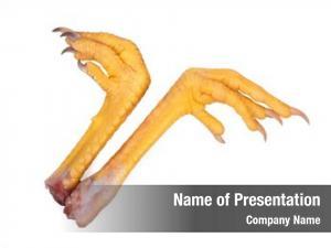 Chicken fresh raw feet foot