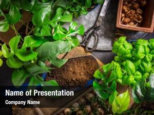 Replanting urban jungle plants herbs,