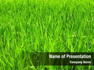Texture green grass grass field