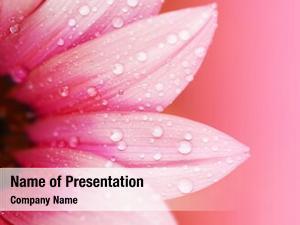 Pink flower petals, macro on flower, beautiful abstract