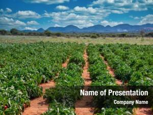 Horticulture Powerpoint Templates Horticulture Powerpoint