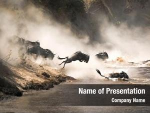 Wildebeest crossing the Mara River during the annual great migration