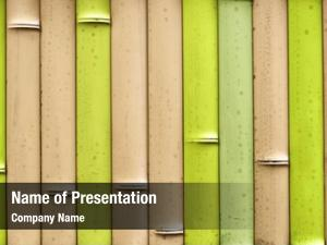 Bamboo fence-