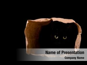 Bright yellow eyes of a black cat shining in the darkness, hiding in the shadows of a paper bag,  on black; with copy space