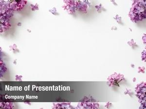 Decorative frame of beautiful purple lilac flowers, with space for text on white
