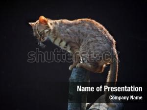 Rusty spotted cat powerpoint template