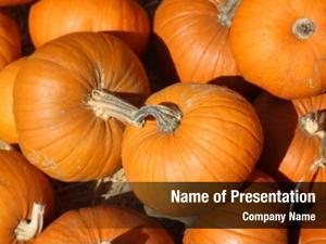 Pumpkins-