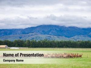 Rural new zealand landscape free