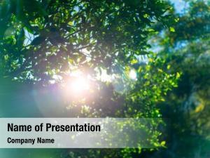 Tree fresh green foliage, sun