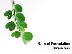Tree, leaves apta whose scientific