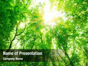 Fresh abstract natural green tree