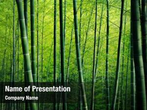 Trees bamboo forest nature concept