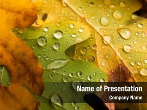 Autumn raindrops fallen leaves