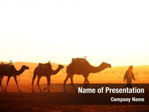 Sahara caravan camels desert, morocco