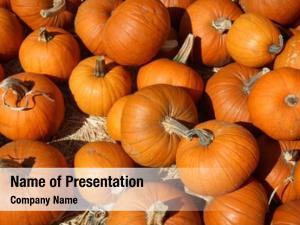 Pumpkin pumpkins sale patch