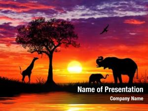 Animals silhouette african sunset