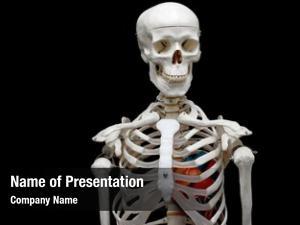Heart skeleton model