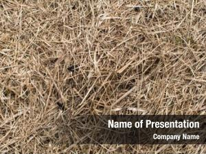 Close up, dry grass hay texture