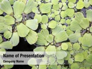 Plants pond water