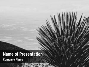Cactus landscape large mexican landscape