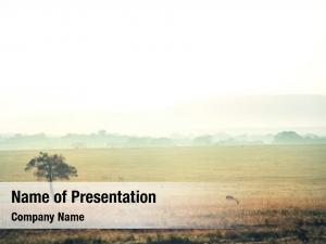 National masai mara park landscapes,