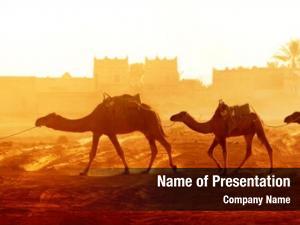 Camels horizontal caravan sahara desert,