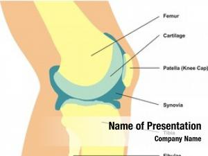 Cross knee joint section showing