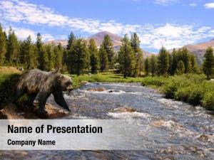Crossing grizzly bear stream