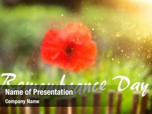 Red remembrance day poppy