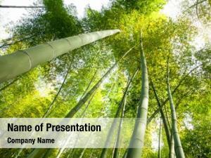 Trees green bamboo natural