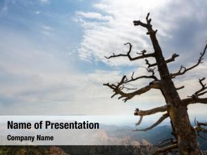 Top dry tree mountain