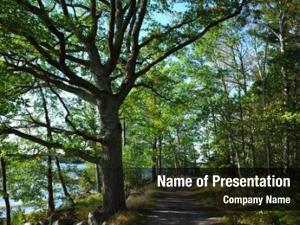Sprawling path green tree forest