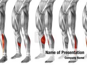 Human concept conceptual lower leg