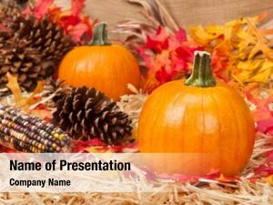 Theme autumn holiday pumpkins, corn,