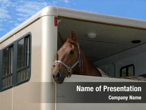 Horse in the trailer