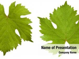 Leaf green vine