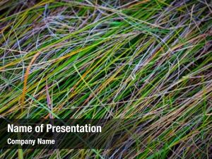 Colorful abstract natural grass
