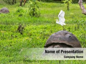 Tortoise galapagos giant egret bird,