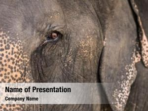 Close elephant eye