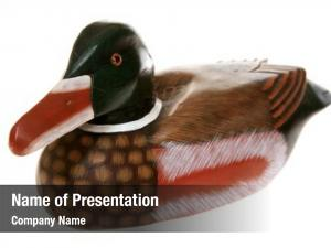 Duck genuine wooden decoy