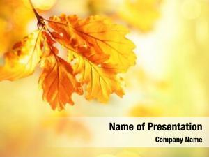 Leaves autumn yellow oak tree