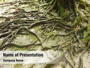 Moss root tree