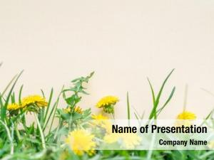 Blank yellow paper green grass
