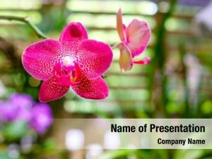 Flower beautiful orchid soroa orchid