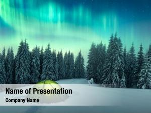 Winter northern lights forest