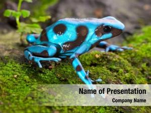 Rain frog tropical forest blue