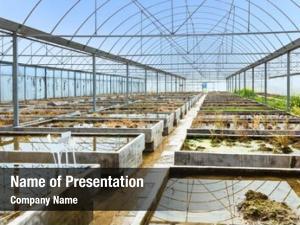 Farm old empty plant breeding