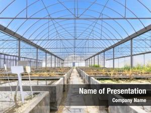 Farm old empty plant breeding