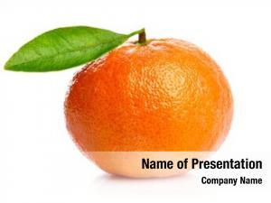 Green ripe tangerines leaf design