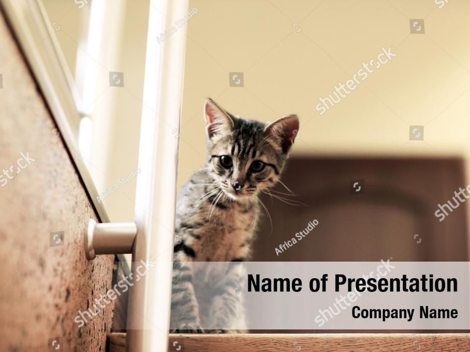 Playing Walking Cute Cat Powerpoint Template Playing Walking Cute Cat Powerpoint Background